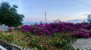 Im Urlaub angekommen. Das dach der Terrasse unsrer ersten Unterkunft